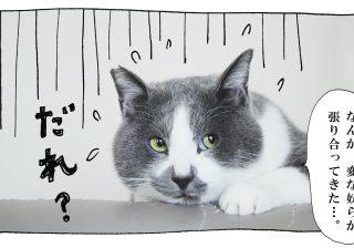 【猫写真4コママンガ】「豪華ゲスト!のイベント告知」パンチョとガバチョ #58