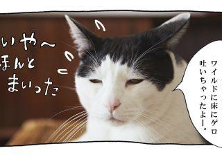 【猫写真4コママンガ】「泥酔」パンチョとガバチョ #59