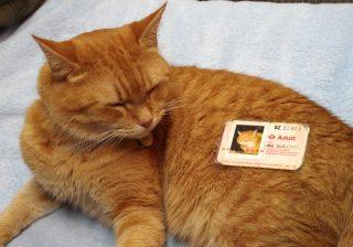 【か、かわいいニャー!】奇跡を起こした世界一有名な猫に会ってきた!