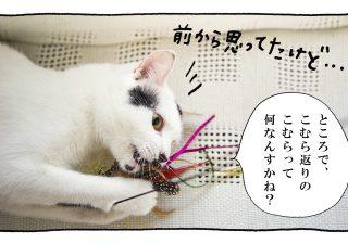 【猫写真4コママンガ】「こむら」パンチョとガバチョ #61