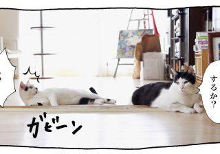 【猫写真4コママンガ】「絡みたい」パンチョとガバチョ #62
