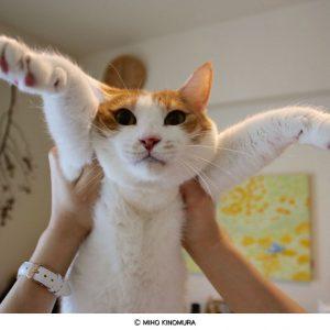 """【譲渡会もある!】おしゃれな """"ネコのいる暮らし"""" を見てきた!"""