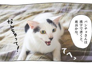 【猫写真4コママンガ】「肩書か」パンチョとガバチョ #64