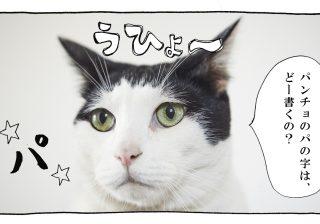 【猫写真4コママンガ】「ブランディング」パンチョとガバチョ #65