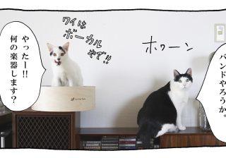 【猫写真4コママンガ】「バンド」パンチョとガバチョ #66