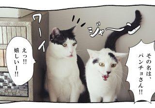 【猫写真4コママンガ】「中の上」パンチョとガバチョ #67
