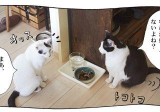 【猫写真4コママンガ】「モデル志望」パンチョとガバチョ #68