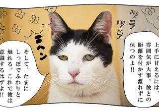 【猫写真4コママンガ】「モテテク」パンチョとガバチョ #69