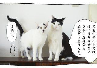 【猫写真4コママンガ】「グレーな部分」パンチョとガバチョ #70