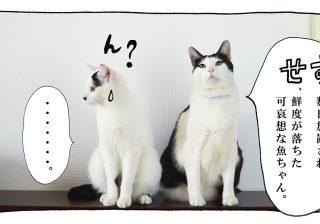 【猫写真4コママンガ】「さしすせそ」パンチョとガバチョ #71