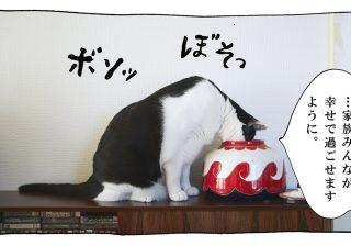 【猫写真4コママンガ】「そんなキャラか」パンチョとガバチョ #73