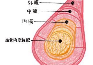 アラフォーになる前に…鍛えたい「血管力」って何?