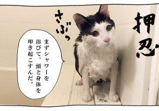 【猫写真4コママンガ】「イケメンな朝活」パンチョとガバチョ #74