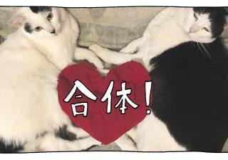 【猫写真4コママンガ】「2018謹賀新年」パンチョとガバチョ #78