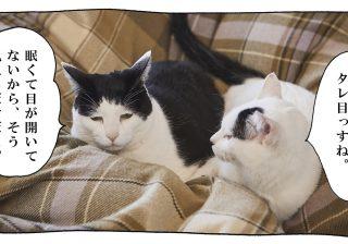 【猫写真4コママンガ】「猫にだっている」パンチョとガバチョ #81
