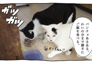 【猫写真4コママンガ】「パンチョあるある」パンチョとガバチョ #83