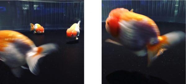 pesche 1