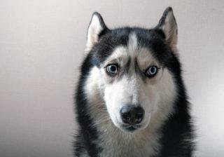 あなたに不運が訪れる…⁉ ペットが告げる「不吉な予兆」4選