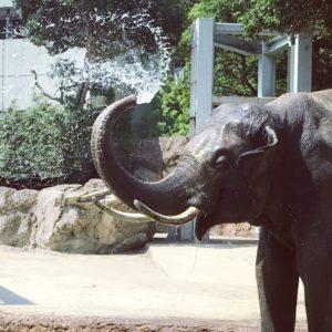 ゾウのアレ激写! 『上野動物園』で大きな動物を超かわいく撮っちゃうコツ #33