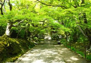 京都お得旅行...パワースポットの人気エリア 『嵐山』おすすめ穴場案内