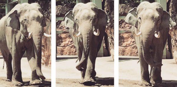 zoo19-1280×631