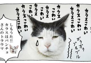 【猫写真4コママンガ】「兄さんのトラウマ」パンチョとガバチョ #89