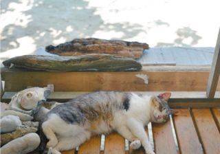 """いい猫写真が撮りたい! カメラマンおすすめ""""沖縄""""猫スポット"""