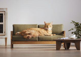 人間もビックリ! 今、猫さま家具がおしゃれすぎる~