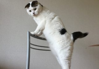 シリアスもギャクも表情が秀逸! anan猫さま大賞こぼれ写真 #3