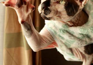 肌触りは生八つ橋?! 猫さまの真実に迫るすごいおかた。anan猫さま大賞こぼれ写真 #4