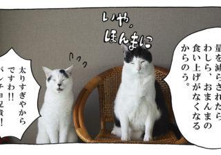 【猫写真4コママンガ】「面構え」パンチョとガバチョ #93