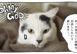 【猫写真4コママンガ】「熱中症対策」パンチョとガバチョ #94