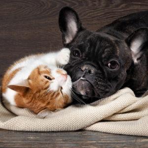 うちの猫さま、何してる…? 留守中の様子がわかる「ペットカメラ」3選
