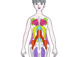 楽に痩せられる? 知っておきたい「体幹」の整え方!
