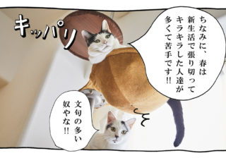【猫写真4コママンガ】「文句たれ二重アゴ」パンチョとガバチョ #101