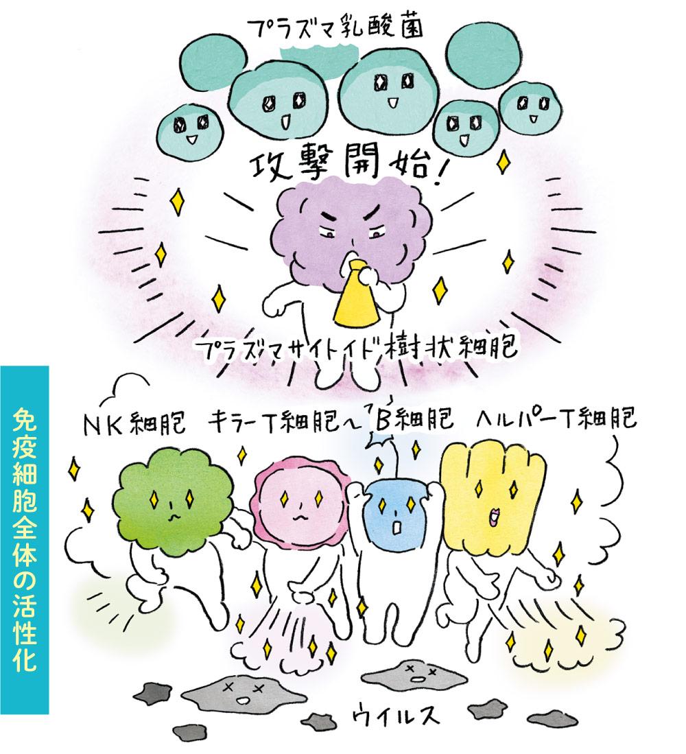 免疫細胞全体の活性化