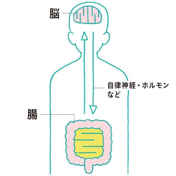 脳腸相関イメージ