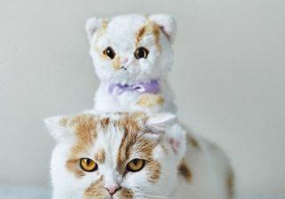 ホイップ、コムタン登場! キュートすぎる「猫グッズ」たち