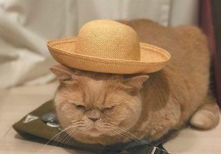 クリエイターの猫はやっぱりオシャレ! 麦わら帽がお似合いニャン