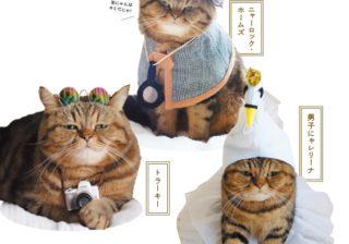芸達者な「スター猫」たち フォロワー数24万人でテレビにも!