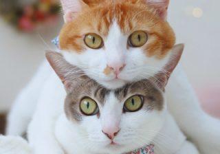 """トイレ姿に悶絶!? 双子のシンクロっぷりが""""かわいい猫""""たち"""