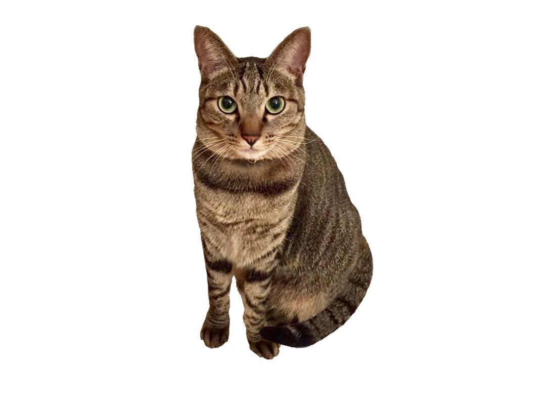 2しっぽ巻き猫