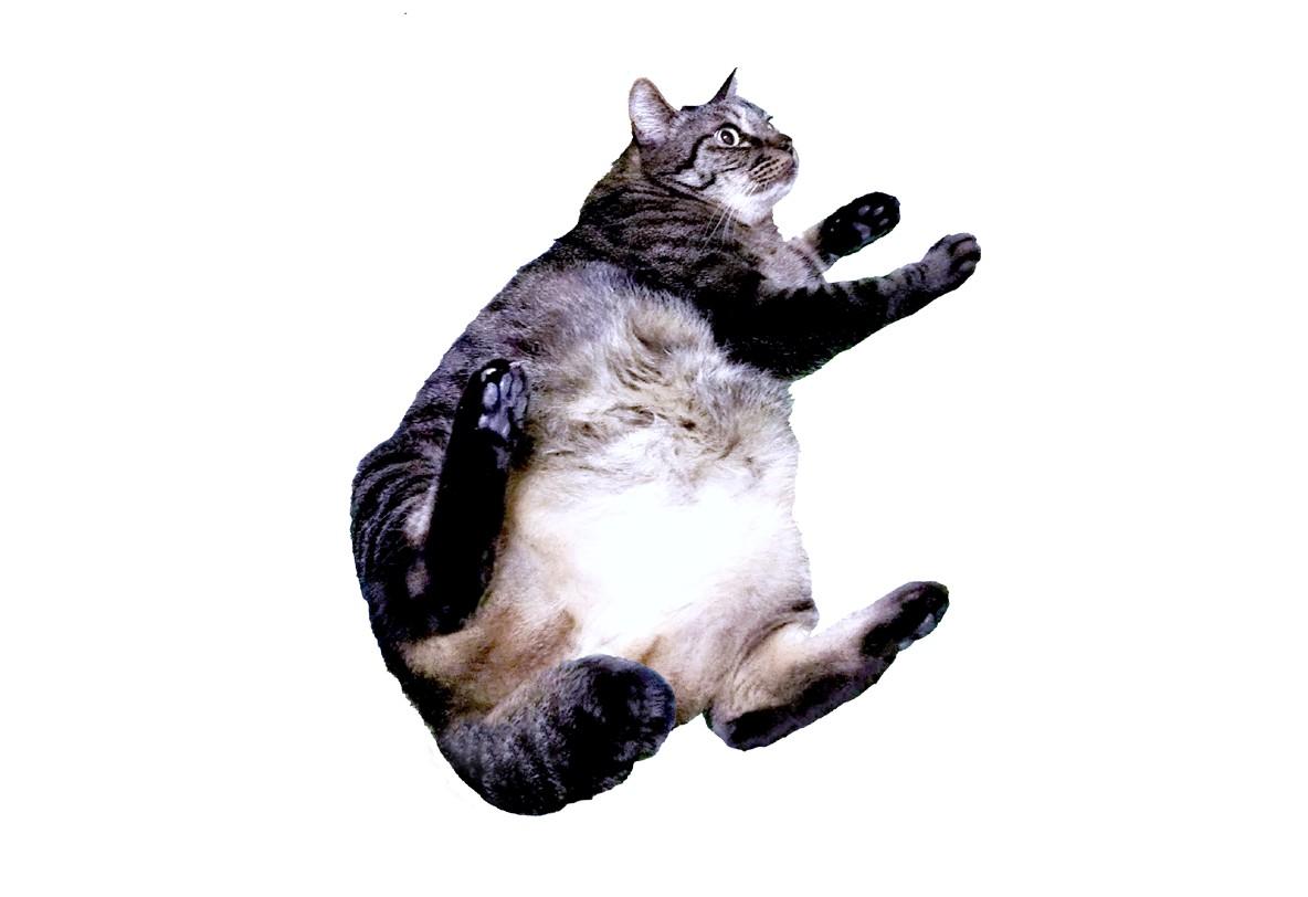 3.オヤジ猫