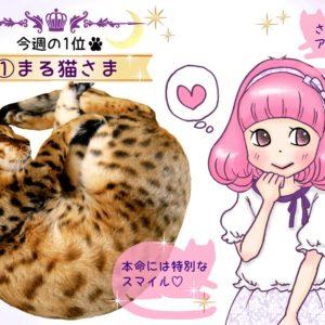 【猫さま占い】あなたは何猫? 6月17日~23日猫さま運勢ランキング
