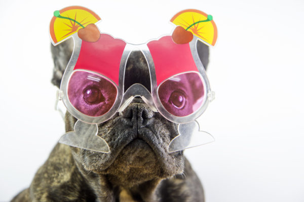Dog with cocktail glasses