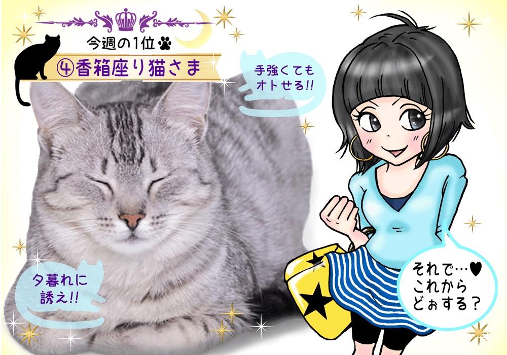 完成猫さま占い#4香箱猫1
