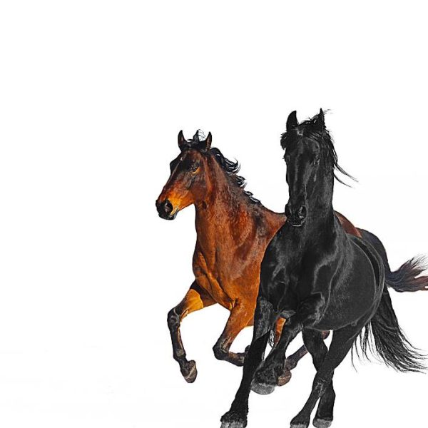 Old Town Road (Remix) feat.Billy Ray Cyrus