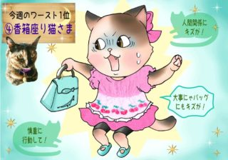 【猫さま占い】傷つく運命の猫さまは? 8月12日~18日運勢ランキング