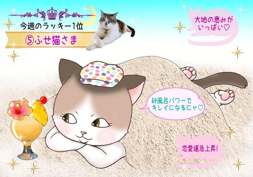 猫占い#11