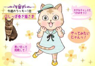 【猫さま占い】恋が叶う猫さまは? 8月26日~9月1日運勢ランキング